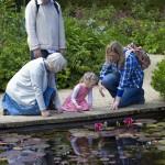 lilly-pond-805207_1280(1)