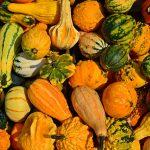 Sukkot Gourds