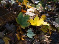 rake leaf