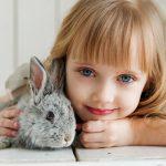 bunny activity