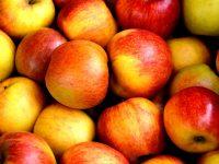 fruit-sukkot