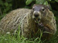 groundhog-activities