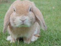 bunny-ideas