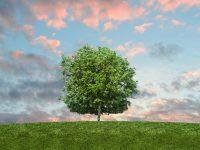 tree-activity