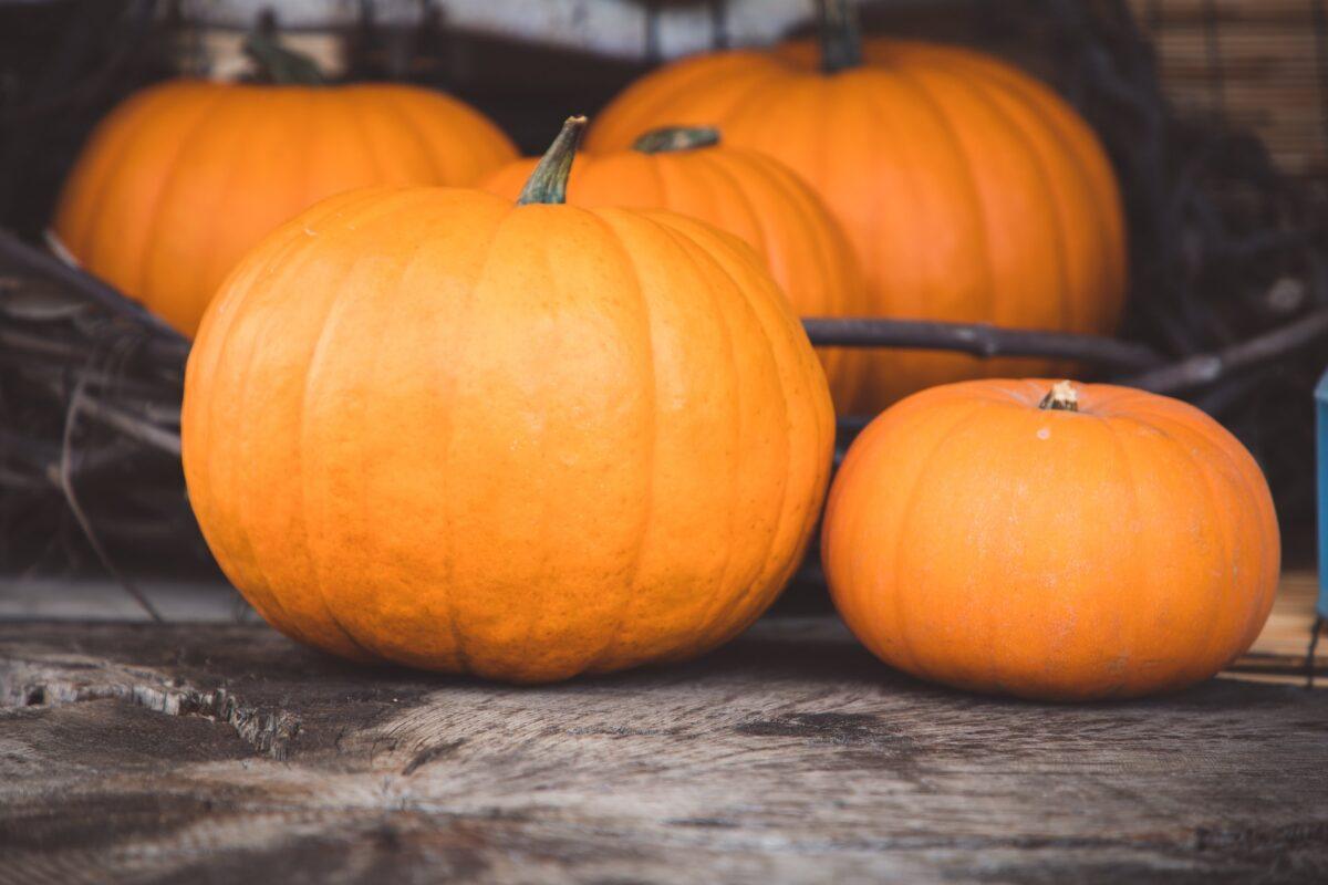 pumpkin-art
